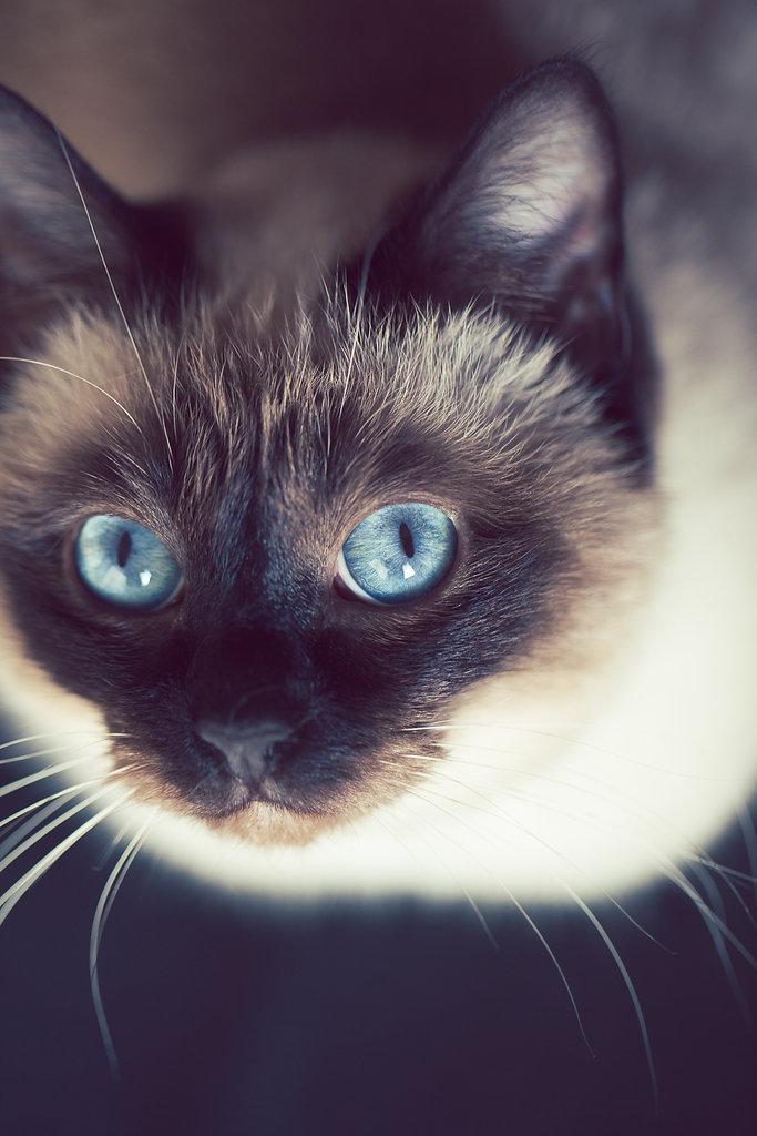 48/52 : Perfect blue eyes